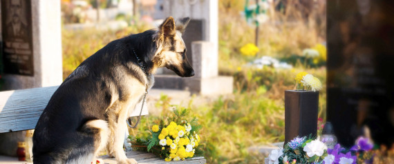 Dealing With Pet Loss | Cristina Miliaresis