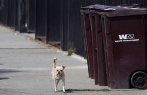 unwanted dog