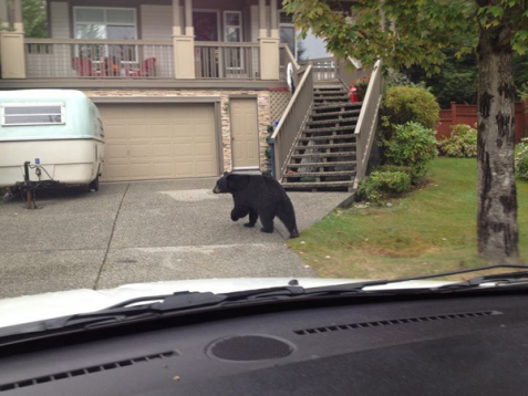 'Bear at door': Mail carrier has best reason ever not to deliver package - Pets - TODAY.com