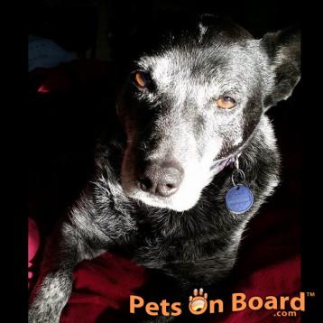 Adopt Lou Lou a Friendly Female Terrier Mix - Hazel Park, MI