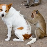 Does My Dog Have Fleas? How To Get Rid Of Fleas For Good