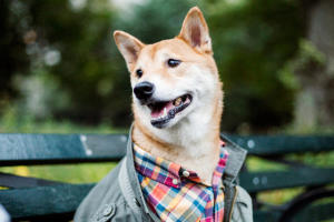 Why This Dog Makes $15,000 A Month |PetsOnBoard.com