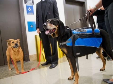 pets and ebola