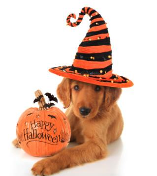 pet news halloween