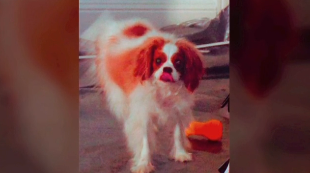 Ebola: Photos of Dallas nurse's quarantined pet dog released | PetsOnBoard.com