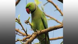 petsonboard parrot