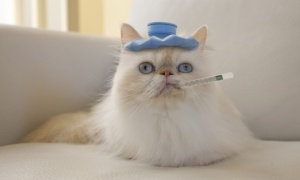 How to prevent your pet getting ill | Direct Line fixology | The Guardian