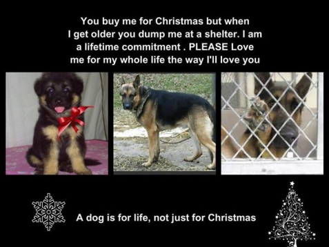 A Dog is for life, not just for Christmas – Pets On Board