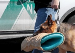 N.J. K-9 given hero's goodbye before being euthanized – PetsOnBoard.com
