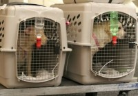 Animal airline deaths: Checking your pet as luggage is 'rolling the dice'