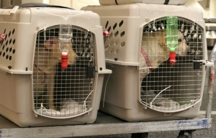 Pet Crated airlines
