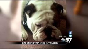 Bubba dies at Petsmart Groomer
