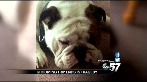 Bubba dies at Petsmart Groomer
