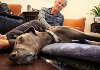 Pet hospice helps owners say goodbye | PetsOnBoard.com