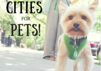 The 10 Best Cities To Live In If You Have A Pet