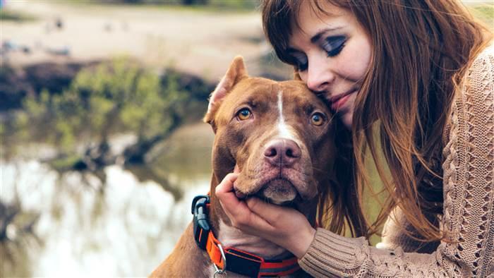 I And Love And You Dog Food Recall