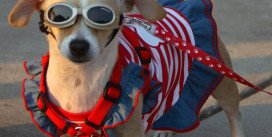 6 Natural Ways to Keep Your Pet Calm on the Fourth of July | PetsOnBoard.com