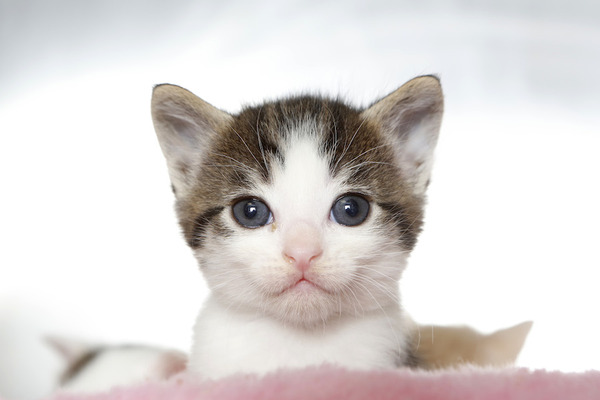 920484_1_0709-kitten_standard