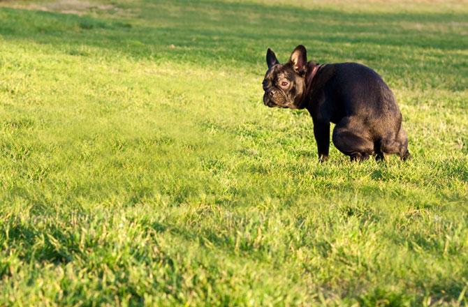 dnews-files-2014-01-dogs-butt-compass-poop-pole-670-jpg