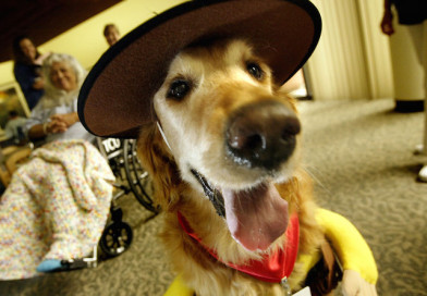 Halloween pet safety: Hide candy, secure cords – PetsOnBoard.com