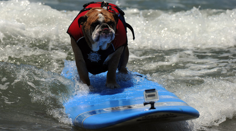 Giant dog flying first class stuns airline passengers – PetsOnBoard.com