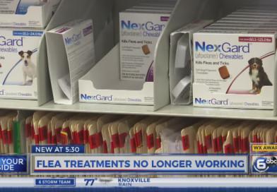 Some pet owners concerned flea medications no longer working | PetsOnBoard.com