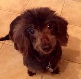 America's Cutest Rescue Dog Turned Philanthropist|PetsOnBoard.com