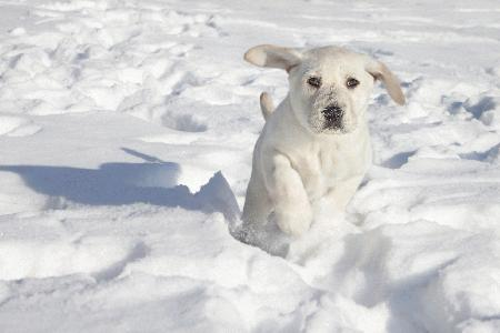 ASPCA offers tips to keep pets safe in cold weather conditions – PetsOnBoard.com