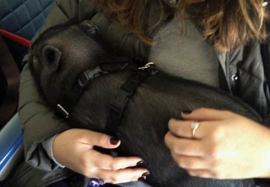 Emotional support animals are making flying beastly, experts say – PetsOnBoard.com