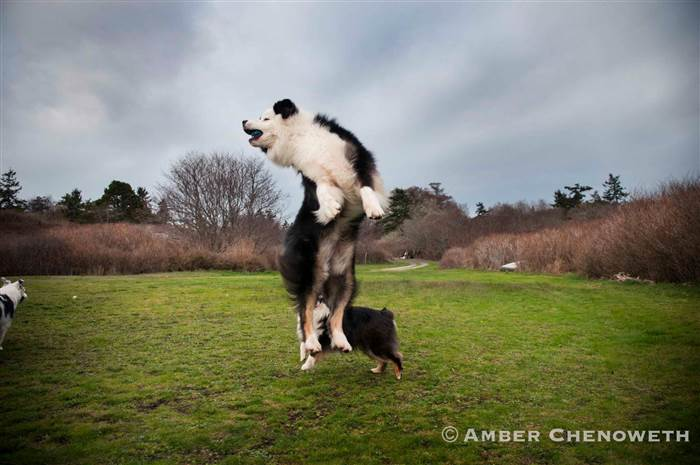 Kathleen Zuidema's dogs enjoying time playing outside.
