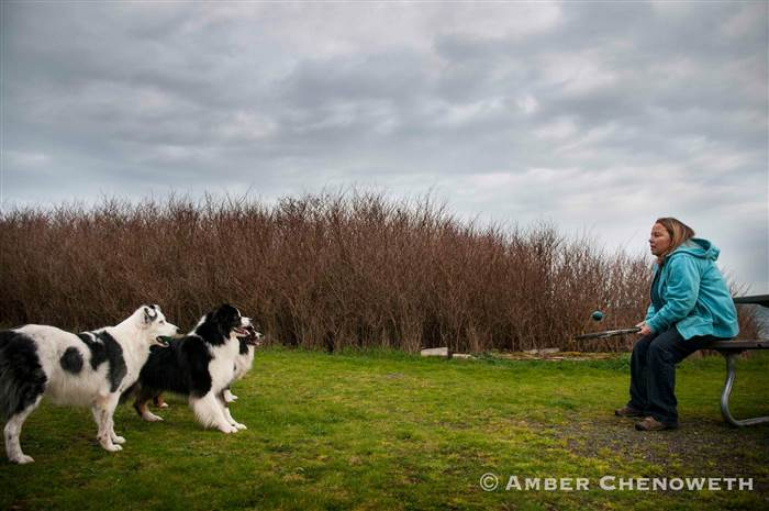Kathleen Zuidema plays paddle ball with her three dogs.