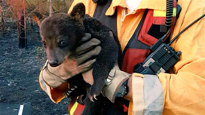 bear-rescue-today-160408-tease-01_b592f4253d5d332d0cc0189ce1ba0c1a.today-inline-large