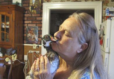 Vermont family win battle to keep pet duck – PetsOnBoard.com
