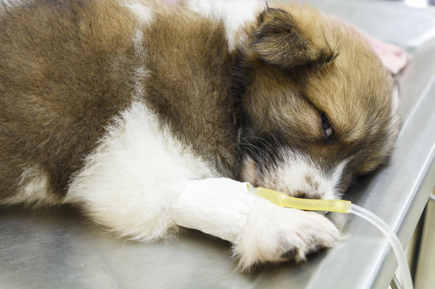 The 7 foods most likely to make your pet sick – PetsOnBoard.com
