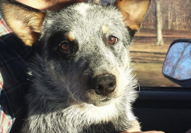Search Continues For Missing Dog After Tornado – PetsOnBoard.com