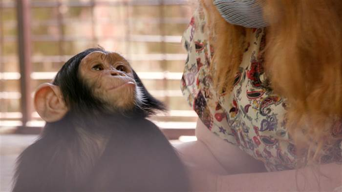 tdy_engel_chimp5_160515_5eea1ad39e629fdde2936f3018d8636c.today-inline-large