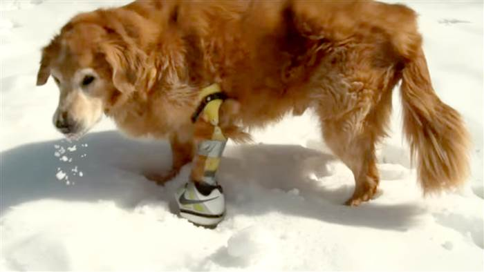 dog-prosthetic-leg-tease-002-today-160603_ee52cad64435ee0252153cf82ab3069c.today-inline-large