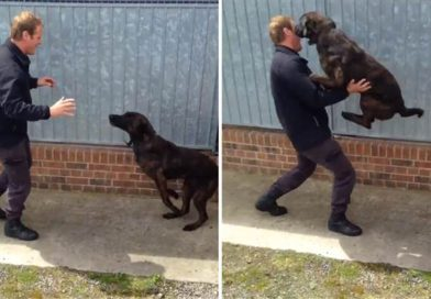 These dogs' ecstatic reunion with their handler will warm your heart-PetsOnBoard.com