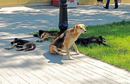 Pet Safety Tips and Signs of Heat Exhaustion -PetsOnBoard.com