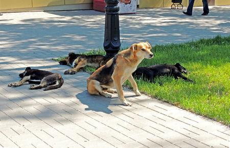 doggie heat