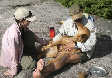 Watch man reunite with family's dog after she survived 10 days in the woods – PetsOnBoard.com