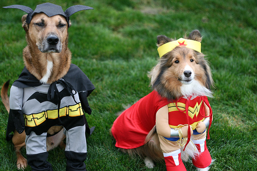 10 Halloween Safety Tips for Pets | PetsOnBoard.com