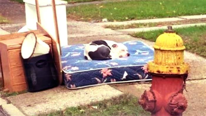 dog-abandoned-family-today-161027-tease_95ed327619b9f7fcb8dcb1abf01ad4e0.today-inline-large