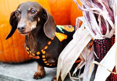 Halloween Safety Tips | ASPCA- PetsOnBoard.com