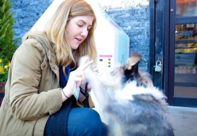 You can literally park your dog, thanks to this startup – PetsOnBoard.com