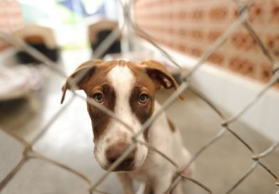 Do animal shelters get a spike in returned pets in the beginning of the year?-PetsOnBoard.com