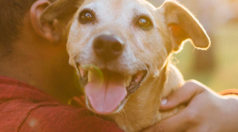 3 Reasons to Celebrate Love Your Pet Day – PetsOnBoard.com