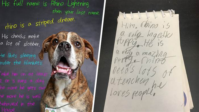 Dog arrives at shelter with letter from kid who loved him – PetsOnBoard.com