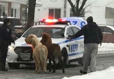 2 ponies escape during winter storm Stella in Staten Island – PetsOnBoard.com