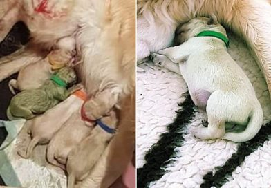 Dog gives birth to a GREEN puppy | PetsOnBoard.com